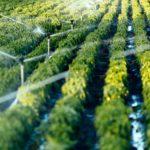 الاستهلاك الأمثل للري الزراعي في المملكة العربية السعودية