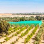 خيارات السياسة للحد من استخدام المياه للزراعة في إمارة أبوظبي